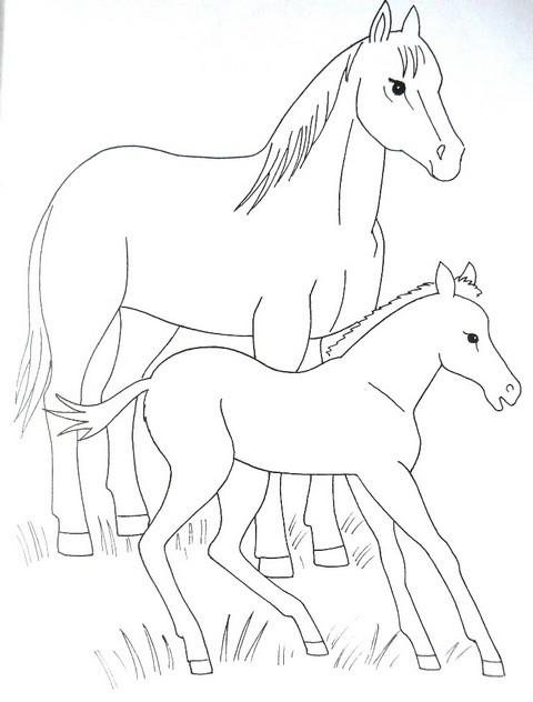 раскраска для детей домашние животные - лошадка