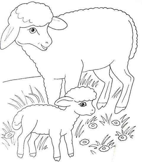 раскраска для детей домашние животные - овечка