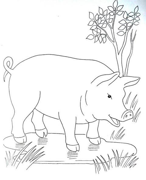 раскраска для детей домашние животные - свинья