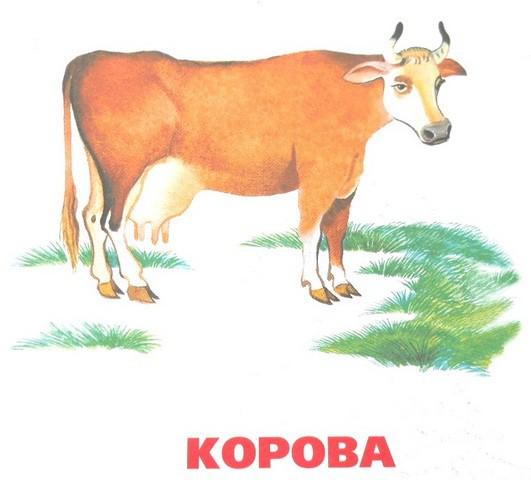 Домашние животные корова