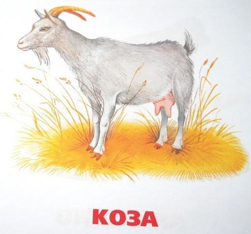 Домашние животные коза