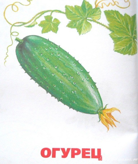 Овощи картинки для детей цветные распечатать - be