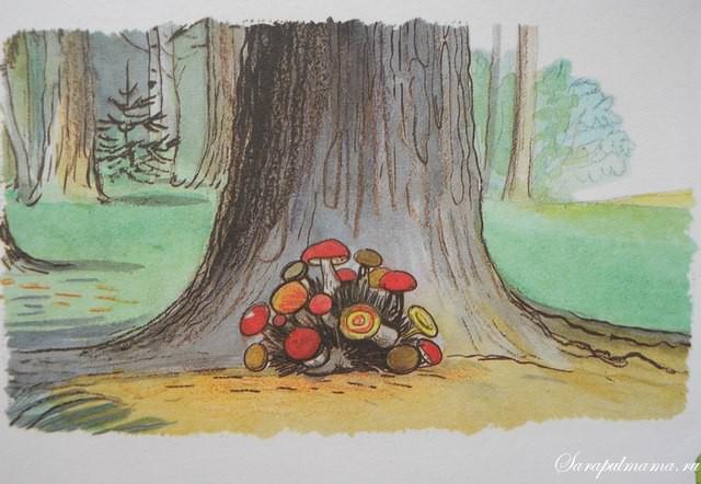 картинки сутеев живые грибы
