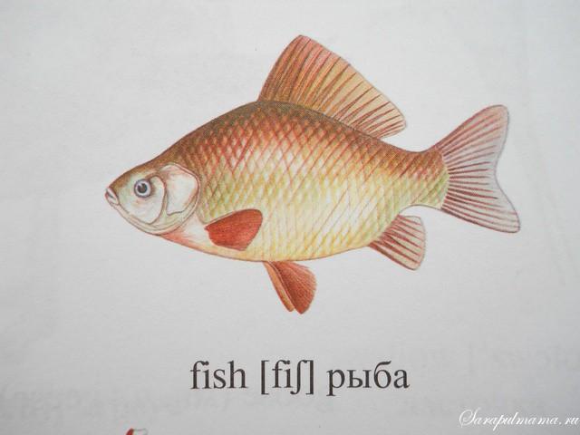рыбалка по английскому