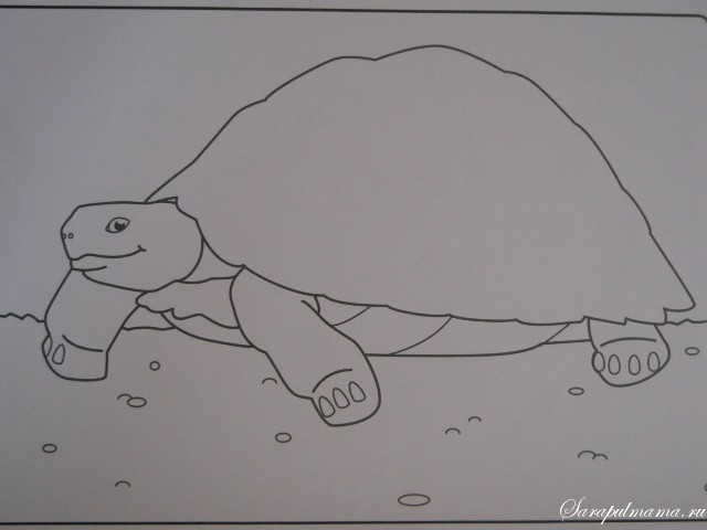 Раскраска Черепаха   сайт Сарапульских мам