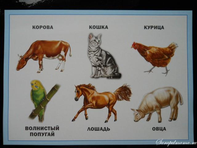 Лото Домашние животные