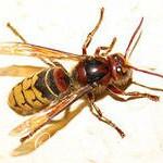 Первая помощь ребенку при укусах и ужаливании насекомых