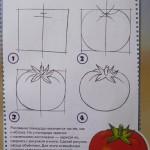 Уроки рисования. Рисуем поэтапно Овощи