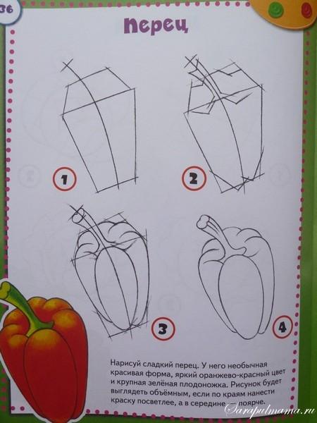 учимся рисовать поэтапно овощи
