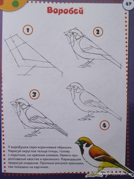 Рисуем поэтапно птицы все