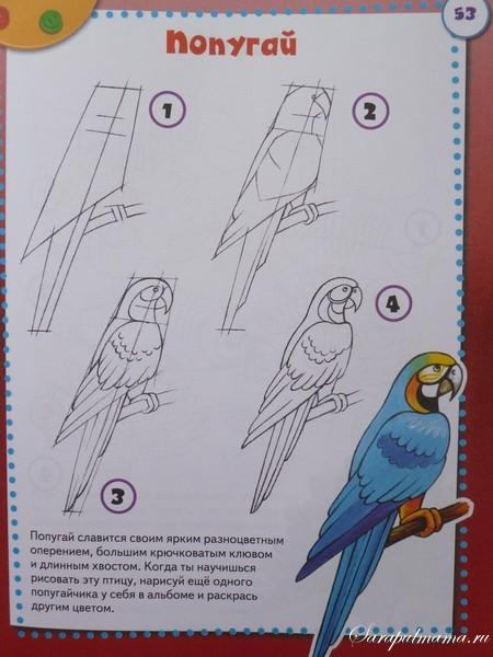 учимся рисовать поэтапно птиц