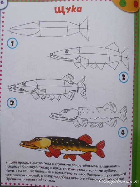 Нарисовать щуку для детей