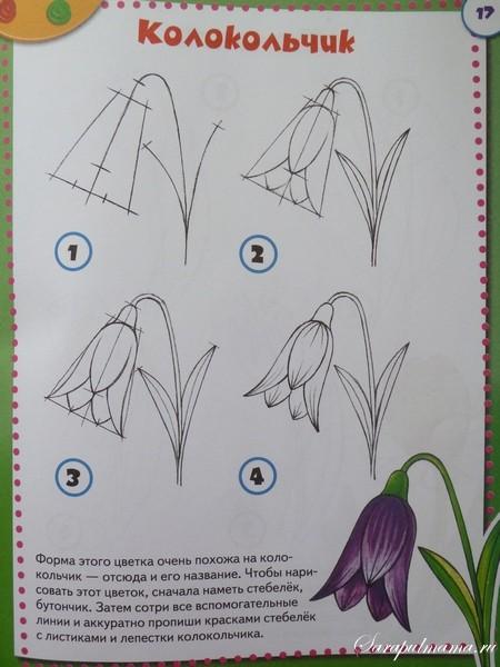 учимся рисовать поэтапно цветы