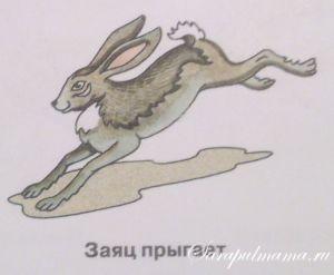 способы передвижения животных