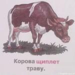 Животные – кто как ест. Картинки