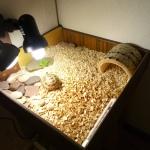 Террариум сухопутной черепахи